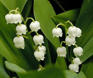 Aromaterapija - mirisne inspiracije Djurdjevak