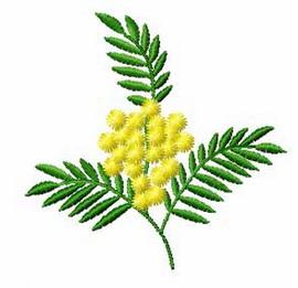 Aromaterapija - mirisne inspiracije Mimosa-11